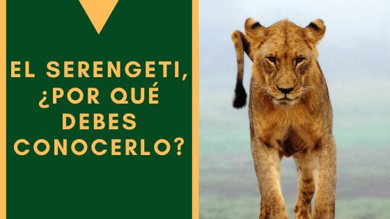 El Serengeti, Por Que Debes Conocerlo