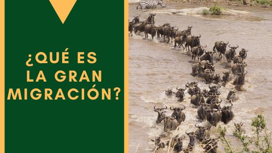 Que Es La Migracion