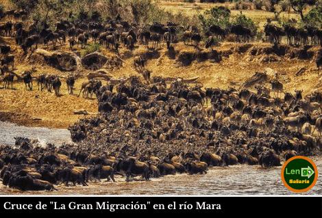 Cruce Masai Mara
