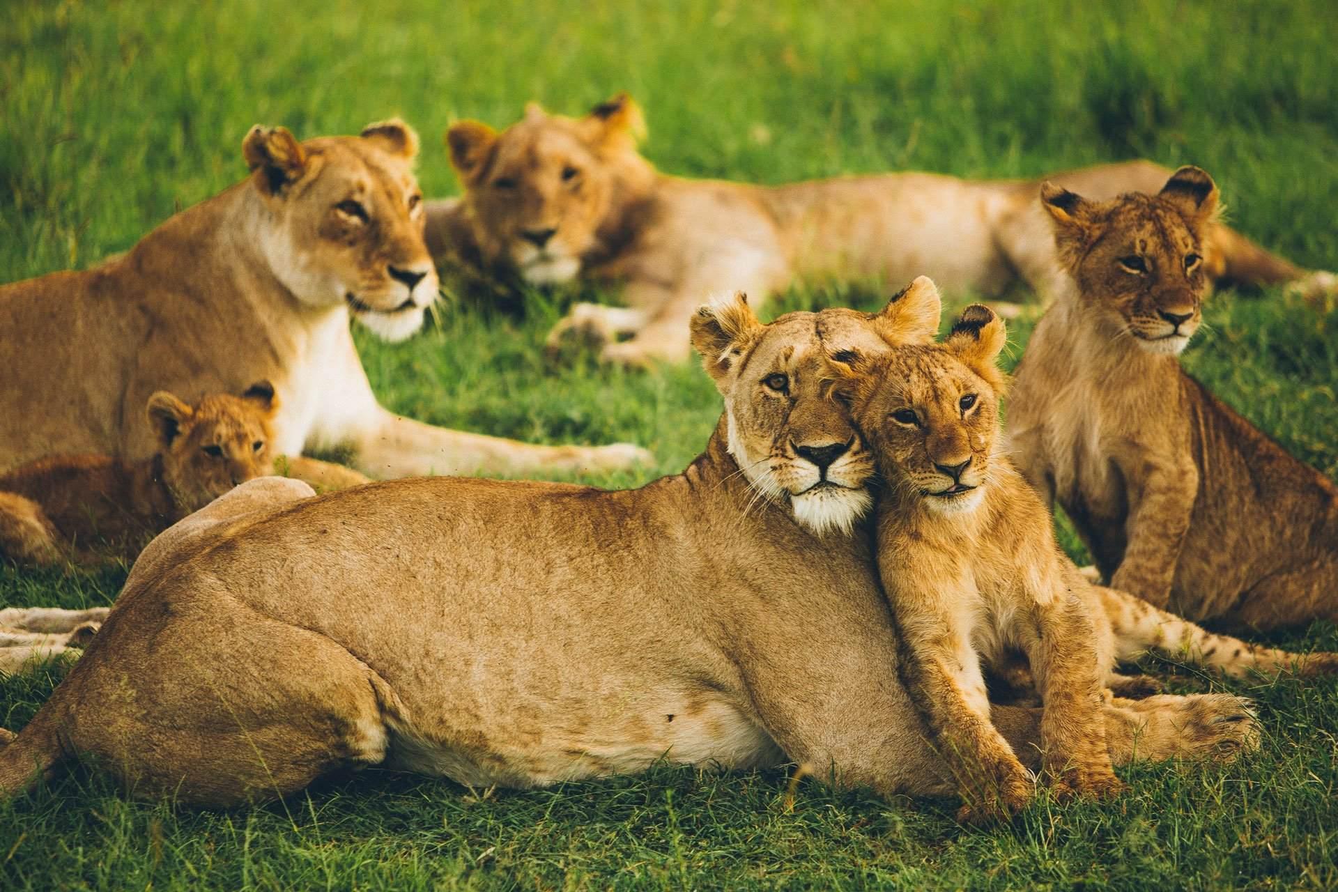 Safari Kenia - Bravo
