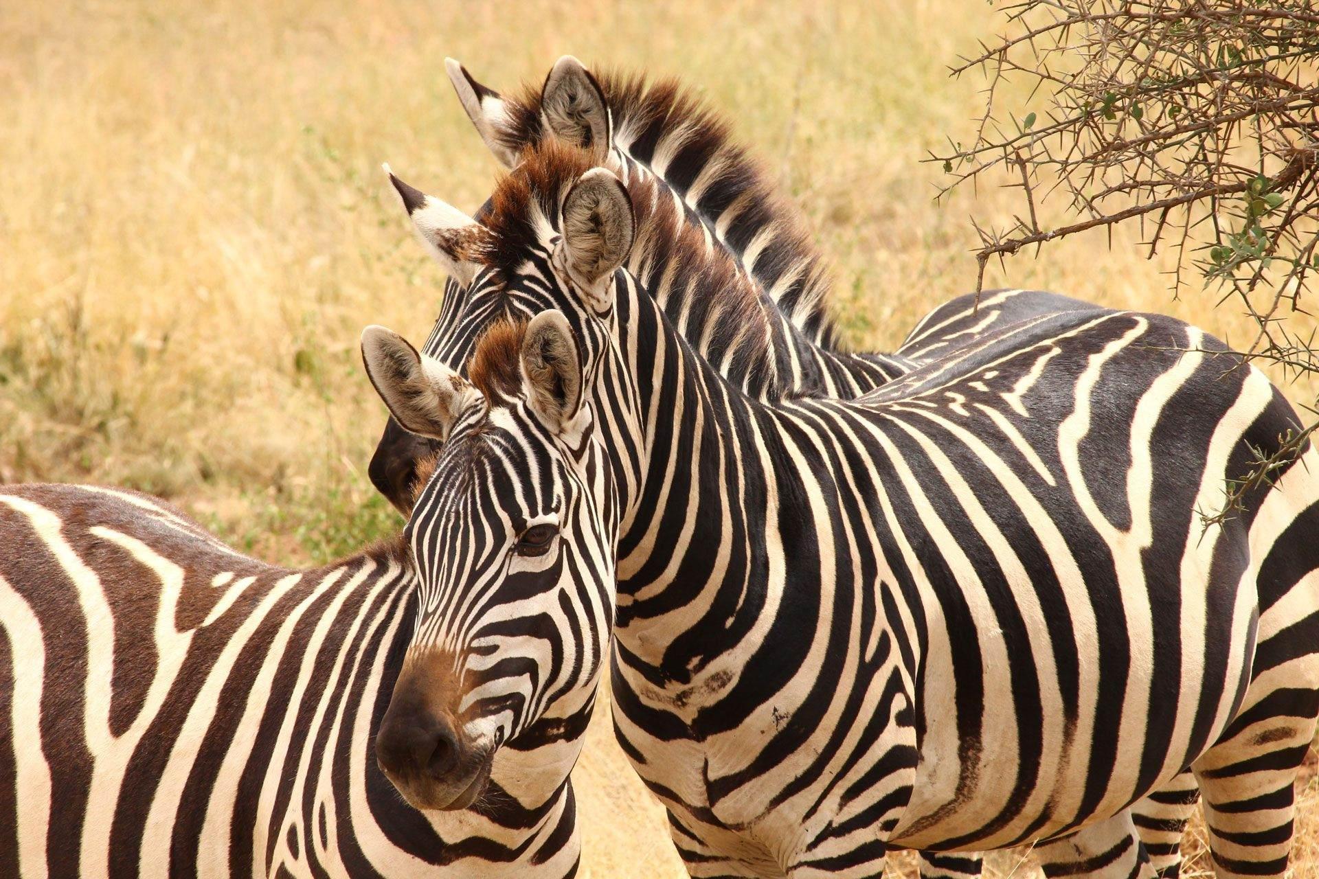 Safari Kenia - Express