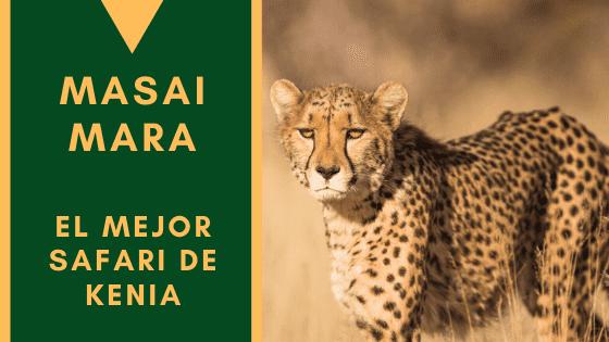 Masai Mara Guepardo