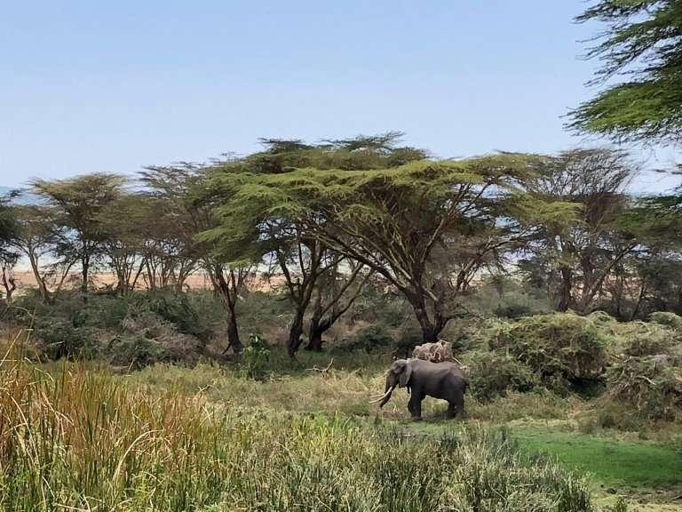 Ngorongoro Safari 2
