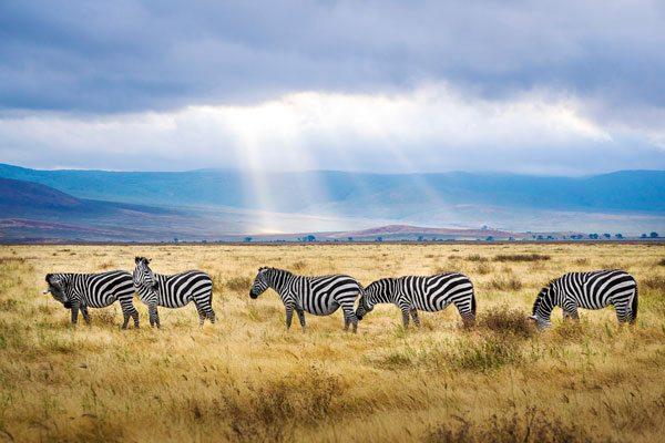 Area de Conservacion Ngorongoro
