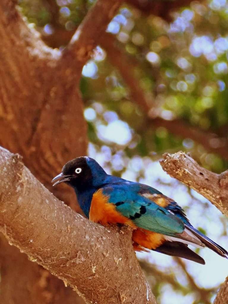 Pajaro Safari
