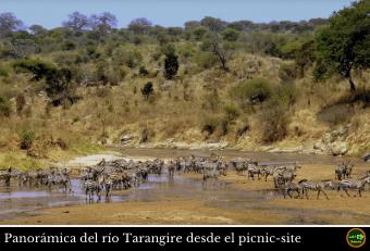 Rio Tarangire