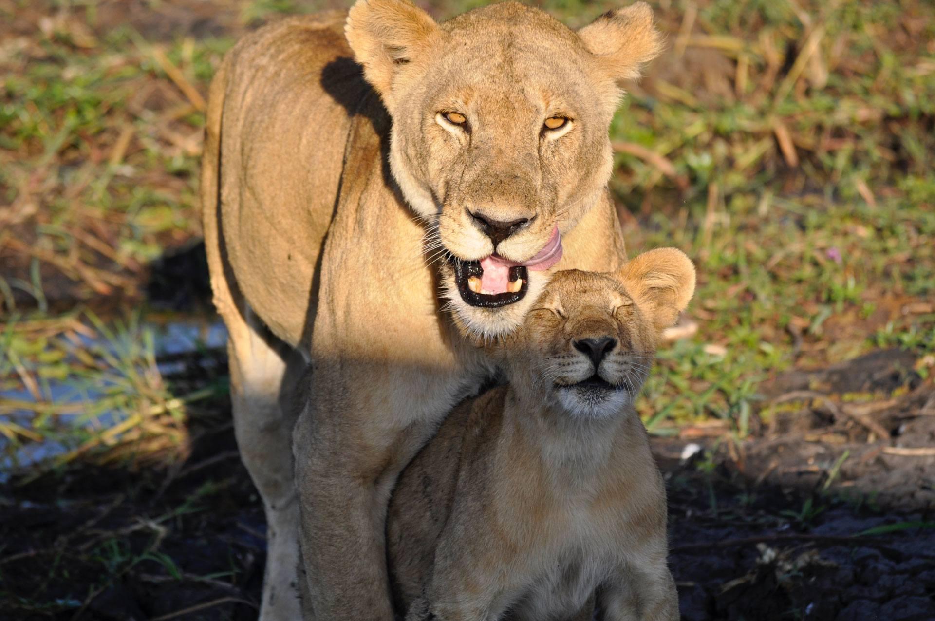 Safari Tanzania - Aventura