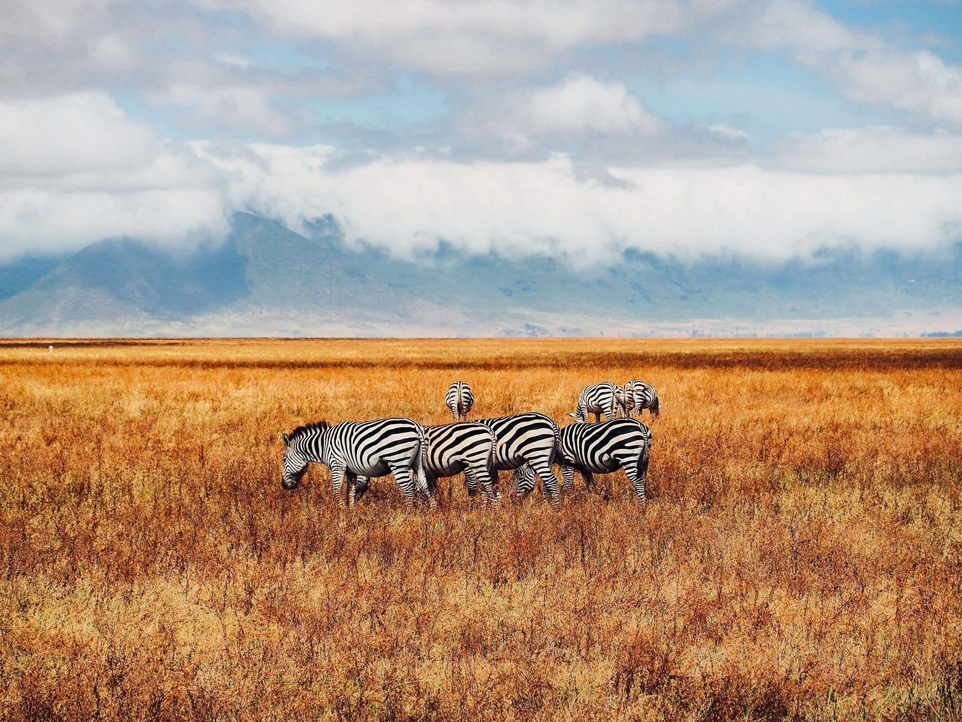 Safari Tanzania - Esencia
