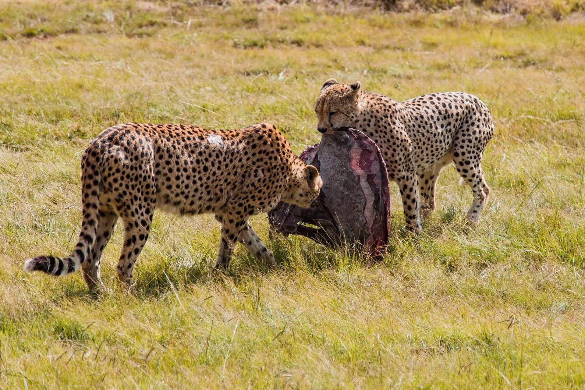 Safari Tanzania - Salvaje